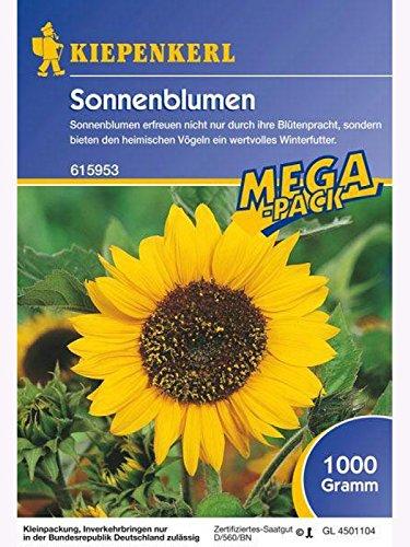 Sonnenblumen Feldsonnenblumen 1kg