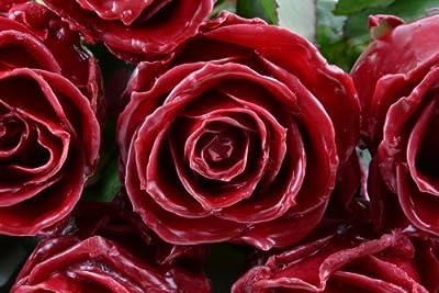Blumenversand - Blumenstrauß versenden - 10 Stück Bordeaux Wachsrosen - mit großen Blüten - mit Gratis - Grußkarte zum Wunschtermin versenden von Blumenversand - Der Renner auf Du und dein Garten