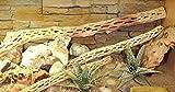 Lucky Reptile CW-S Kaktus Holz klein