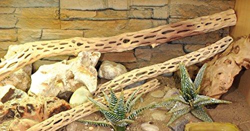 Lucky Reptile CW-S Kaktus Holz klein, S