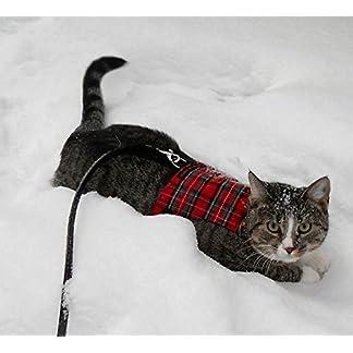 Mynwood Cat Jacket/Harness Royal Stewart Tartan Kitten up to 8month 12