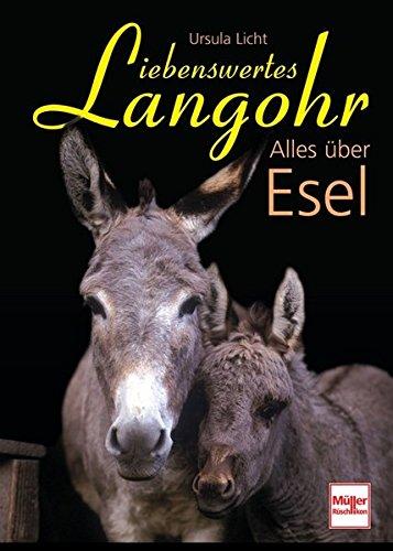 Liebenswertes Langohr: Alles über Esel