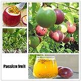 swiftt 40 Stücke Obstsamen Passionsfrucht Samen Mini Bonsai Hausgarten Obst...