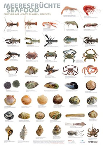 Poster Meeresfrüchte DIN A1
