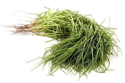 agretti sale erbe - 50 semi