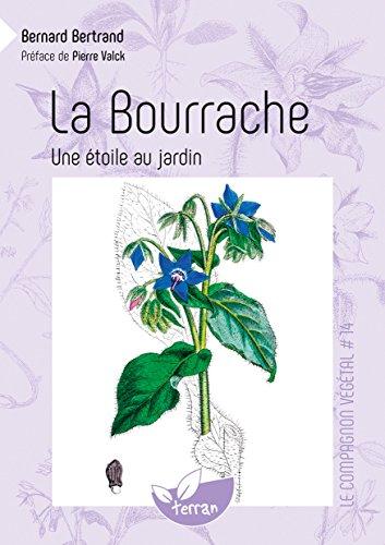 La Bourrache, une étoile au jardin - Vol. 14