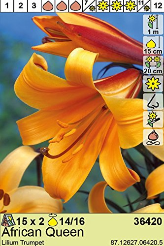 Das Blumenliesel