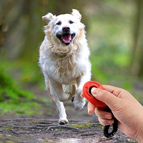 Clicker Hund
