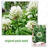250 Samen/Pack, Weißklee-Samen, Topf Klee, eingetopft Balkonpflanzen, Hof Pflanzensamen