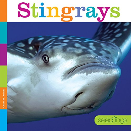 Seedlings: Stingrays