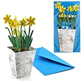 """'""""Daffodil/Narcissi In Flower Pot: 3D Folding Pop Up Card with a pot of Easter Bells–The Ideal Cyclamen–Greeting Card"""