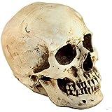 Modèle 1: 1 Crâne Humain en Résine Enseignement Anatomique Décor