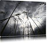Düsteres Gras vorm Regen Format: 120x80 auf Leinwand, XXL riesige Bilder fertig gerahmt mit Keilrahmen, Kunstdruck auf Wandbild mit Rahmen, günstiger als Gemälde oder Ölbild, kein Poster oder Plakat