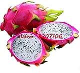 Pinkdose® 100Pcs Pitaya Fruit Seed Perennials Aging House And Garden White Dragon Fruit