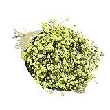 YWLINK Gypsophila ImmerwäHrende Blume NatüRliche Trockenblume Cafe Dekoration KüNstliche Pflanze Hochzeit Party-Wohnkultur