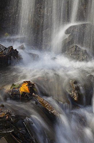 Price comparison product image Marion Owen / Design Pics – Yellow Salmonberry Leaf Clinging To Rocks In Small Stream With Water Cascading Down From Pillar Mountain Kodiak Island Southwest Alaska Autumn Photo Print (55.88 x 86.36 cm)