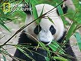 Borella Srl Puzzle 3D N.G. Panda PZ.500