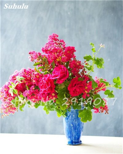 50 Pcs exotiques Géranium semences forestières vivaces Pelargonium peltatum fleurs en pot Geranium plante Bonsaï beauté de votre jardin 13