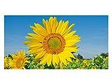 GRAZDesign 991072_90x57 Sichtschutzfolie Sonnenblumen - Wiese | Bedruckte Fensterfolie | Glasdekorfolie als Sichtschutz (90x57cm)