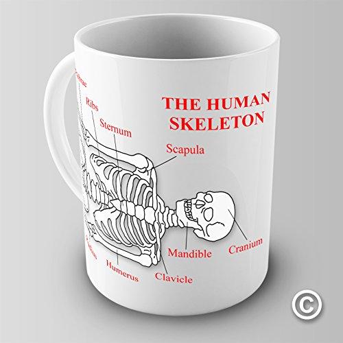 Twisted Envy Educational Becher, das menschliche Skelett, Anterior View Keramik Slogan Funny Tasse, keramik, weiß, 15 OZ