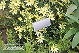 GardenMate® 25er Set Pflanzschilder Poster aus Metall