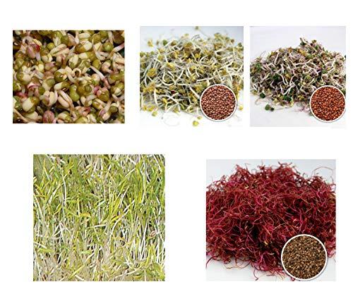 450 g BIO Keimsprossen Mischung -Vital MIX- Keimsaat 4 x 100 g + 1 x 50 g Samen für die Sprossenanzucht Mungobohnen, Daikon-Rettich, Radies, Rote Rübe + 50 g Möhren Sprossen Microgreen Mikrogrün