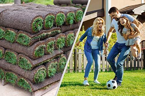 Rollrasen - 30m² echter Fertigrasen - Sorte: Premium Sport- und Spielrasen - Vorgedüngt - Frisch geschält - Gekühlt Geliefert (30 bis 500 qm verfügbar)