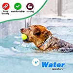 sevicat [2018 upgrade] dog anti flea & tick collar 6 months effectiveness protection for dogs and puppies, adjustable fits (for dog) SEVICAT [2018 Upgrade] Dog Anti Flea & Tick Collar 6 Months Effectiveness Protection for Dogs and Puppies, Adjustable Fits (For Dog) 51tgsMDABvL