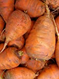 Seedeo® Karotte Ochsenherz (Daucus carota) ca.250 Samen BIO