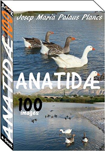 Couverture du livre Anatidæ (100 images) [fr]
