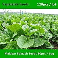 Shopmeeko ^^ Basella Alba Malabar Spinach ^^^^ Para plantar 120 piezas, vegetales de hoja de espinaca de Buffalo ^^^^, mini jardín de espinaca de Ceilán ^^^^