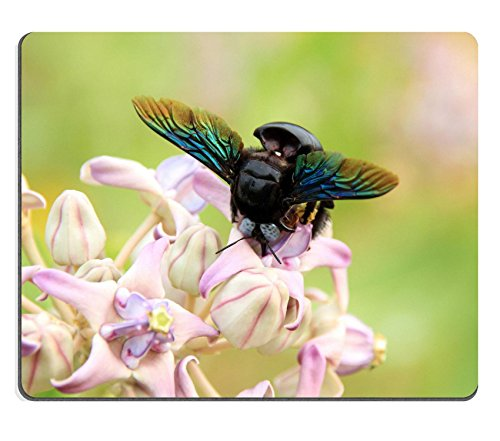 liili-mauspad-naturkautschuk-mousepad-bumblebee-gathering-pollen-yala-national-park-sri-lanka-bild-i