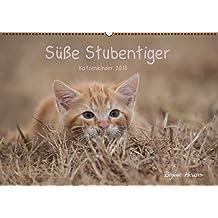Süße Stubentiger - Katzenkinder (Wandkalender 2015 DIN A2 quer): Katzenkinder 2015 (Monatskalender, 14 Seiten)