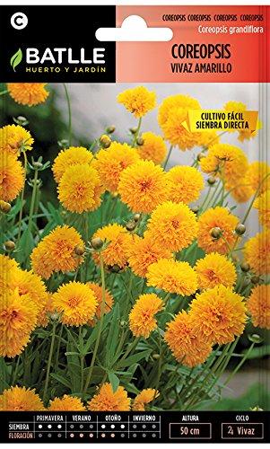 Semillas de Flores - Coreopsis vivaz flor doble amarillo puro - Batlle