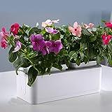 Micro crecen jardín ligero Jardín ecológico verde balcón Máquina automática de crecimiento de plantas Riego automático Macetas perezoso Tamaño 26.5 * 11.7 * 11CM