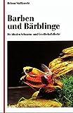 Barben und Bärblinge: Die idealen Schwarm- und Gesellschaftsfische