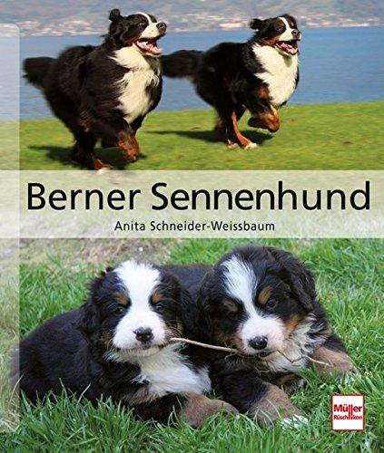 Produktbild bei Amazon - Berner Sennenhund (Hunderassen)