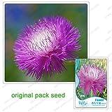 50 Semi / pack, rosa Centaurea cyanus semi, fiori in vaso Profumo Balcone Fiordaliso Semi