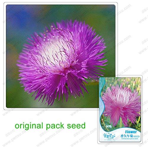 50 graines / Pack, rose Centaurea cyanus Graines, fleurs en pot parfum Balcon Bleuet Graines
