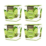 Pajoma Duftkerze 4er Set Lemongras im satinierten Glas, 124 g, Brenndauer: 25 Stunden, in Edler Geschenkverpackung