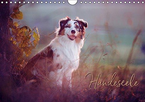 Hundeseele (Wandkalender 2019 DIN A4 quer)
