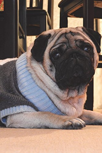 Cool Dog Outfits - Pug Dog in Silly Outfit Worries
