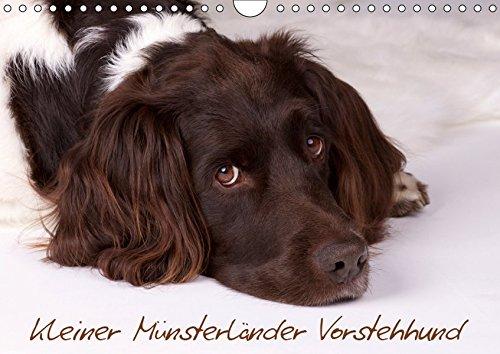 Kleiner Münsterländer Vorstehhund (Wandkalender 2019 DIN A4 quer): Kleiner Münsterländer Vorstehhund - Ein Leben neben der Jagd, Monatskalender, 14 Seiten (Monatskalender, 14 Seiten ) (CALVENDO Tiere)