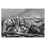 Cuadros Lifestyle Acrylglasbild | Wandbild Glasbild Acrylbild Rahmenlos | Torsten Reuter | Fischkatze, Größe:150x100 cm