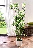 """Dekoleidenschaft Pflanze """"Bambus"""""""