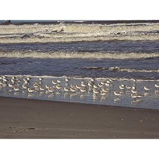 Home Comforts LAMINATED POSTER Coastline Ameland Beautiful Beach Beach Poster Print 61 x 91.5
