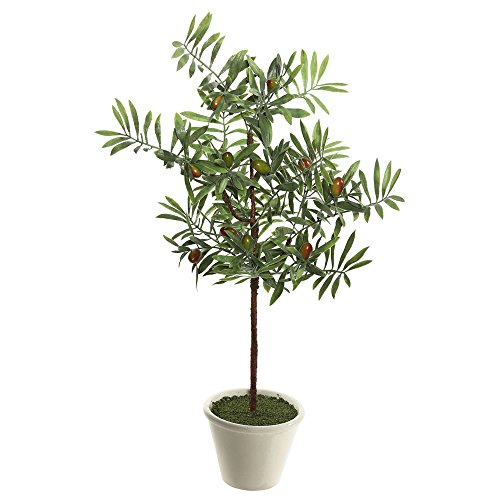 Vickerman fk171203 Everyday Olivenbaum