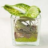 Tischgesteck mit grüner Anthurie im viereckigen Glas - Gesteck mit künstlicher Blume