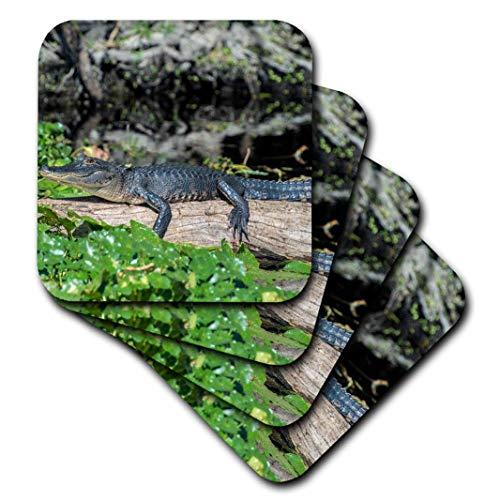 Danita Delimont-Alligatoren-USA, Florida, orange City, St. Johannes Fluss, blau Spring Sp, Alligator-Untersetzer, Gummi, Orange, set-of-4-Soft Alligator Serviette