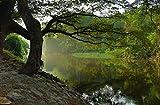 hansepuzzle 22462 Natur - Baum am Wasser, 500 Teile in hochwertiger Kartonbox, Puzzle-Teile in wiederverschliessbarem Beutel